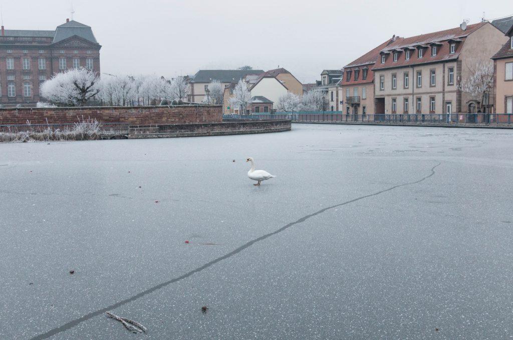 le port de Saverne en hiver